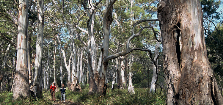 Walking in the blue gum forests - the Arkaba walk, Flinders Ranges South Australia