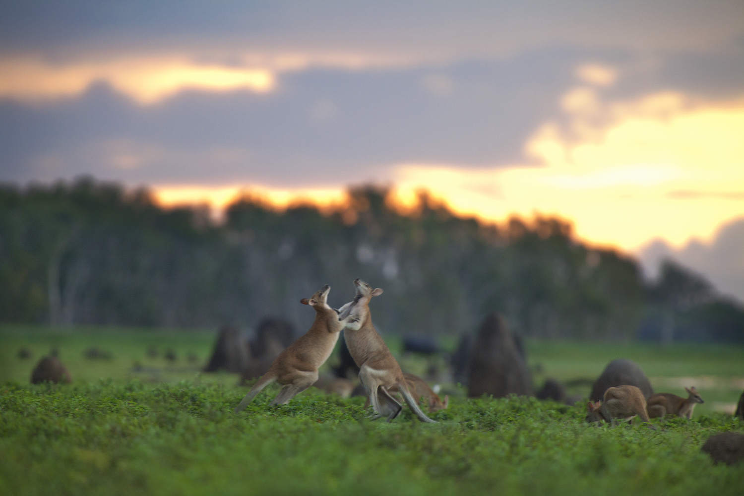 Bamurru Plains is the essence of luxury travel to Australia