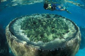 Sal Salis - Ningaloo Reef Blue Lagoon snorkel
