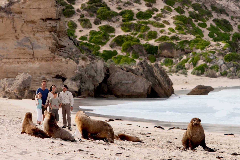 Kangaroo Island seals