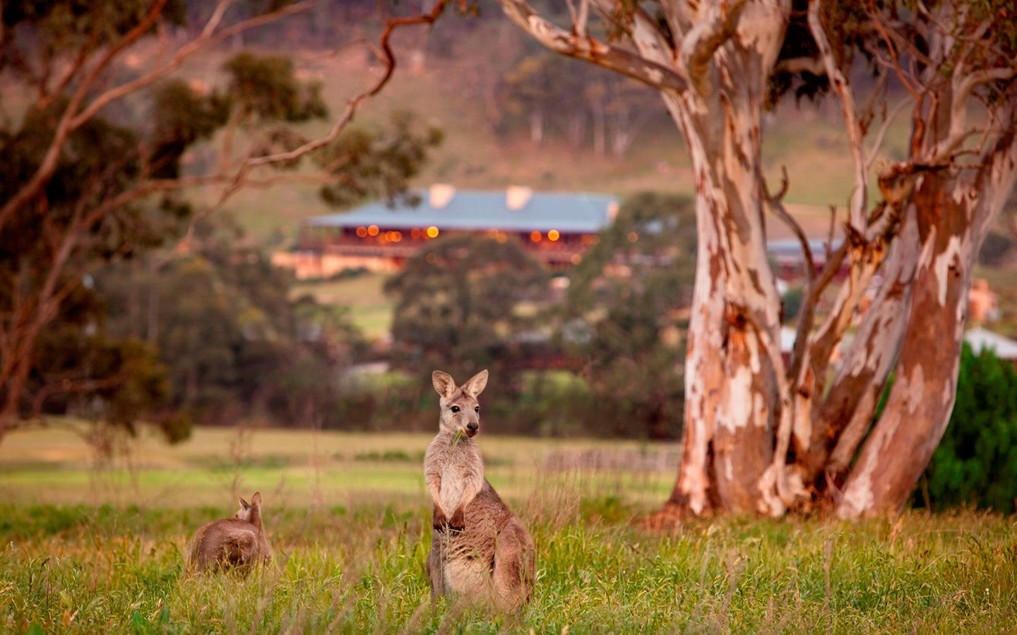 Experience bush luxury and outback experiences in Australia at One and Only Wolgan Valley