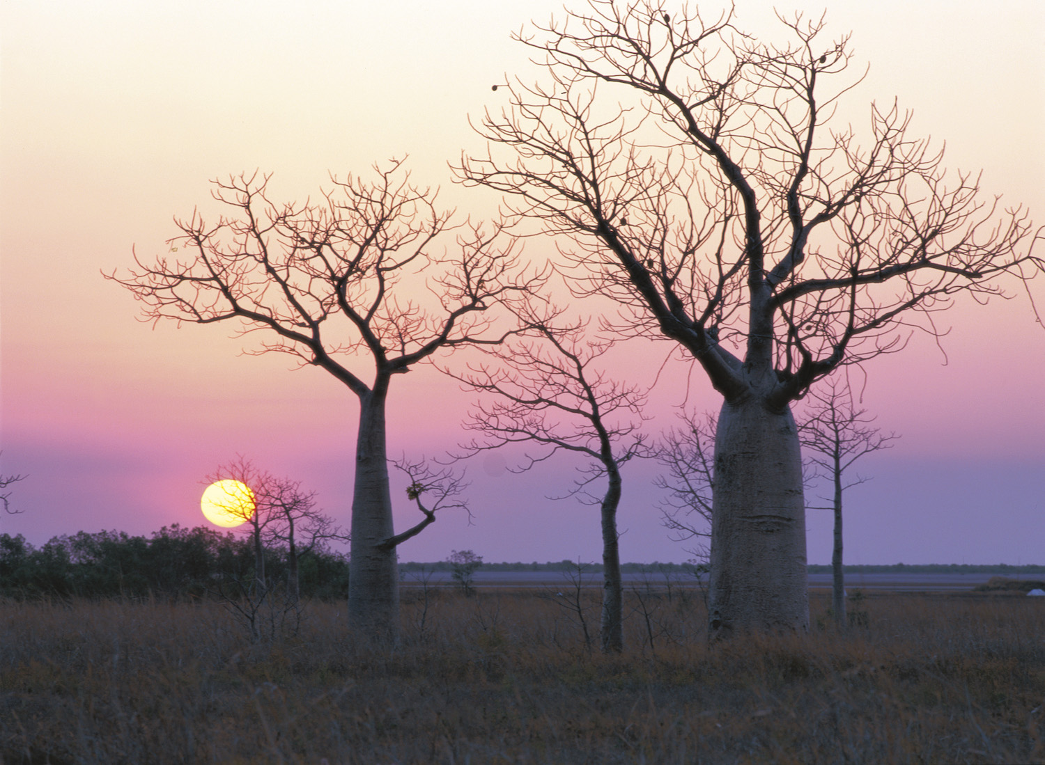 One of the unique and exclusive Australian experiences is watching the sunset over the Baobabs in the Kimberley