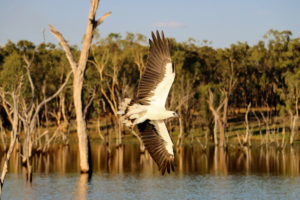 Exclusive Australian accommodation for groups at Crystalbrook Lodge
