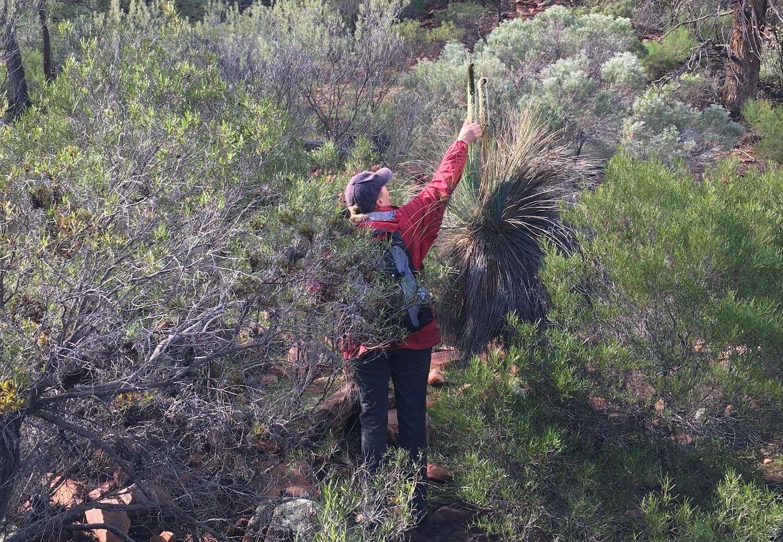 Nicki de Preu - an encyclopaedia of plant knowledge