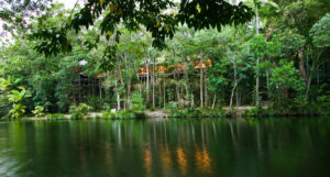 The Daintree Riverview to Silky Oaks Lodge