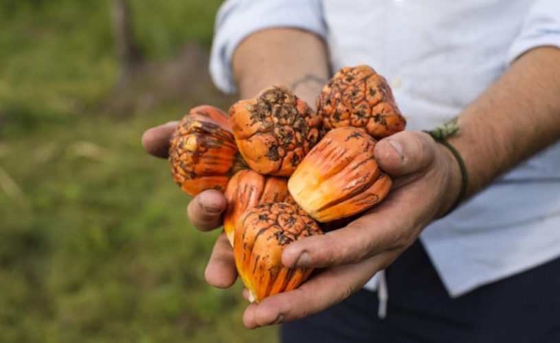 Wild Tastes of the Top End – An interactive four-day food safari with James Viles