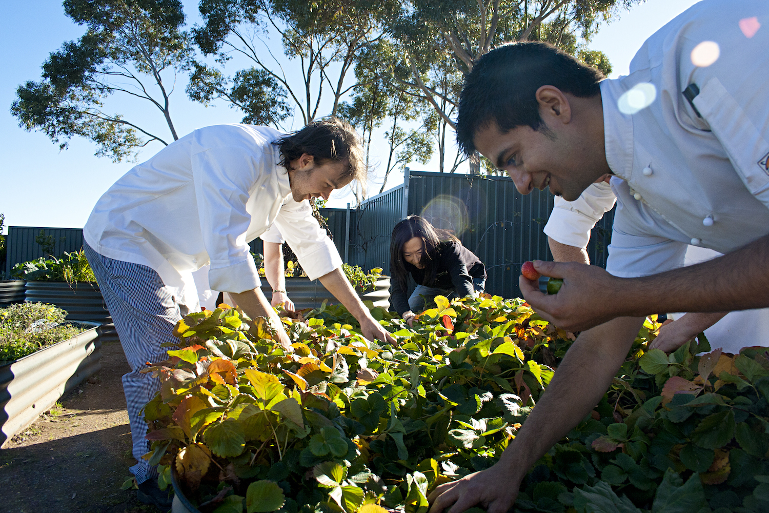 The Louise restaurant Appellation - chef's picking fresh food