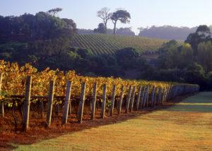 Cape Lodge - Margaret River Vineyards