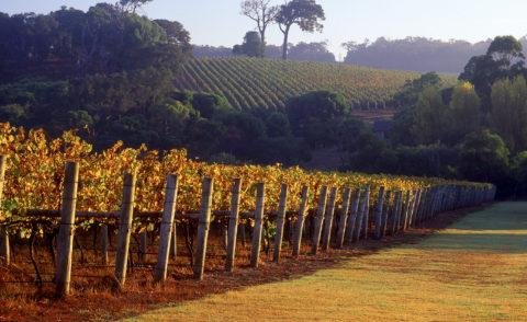 Luxury Australian Itinerary – Wine Flight