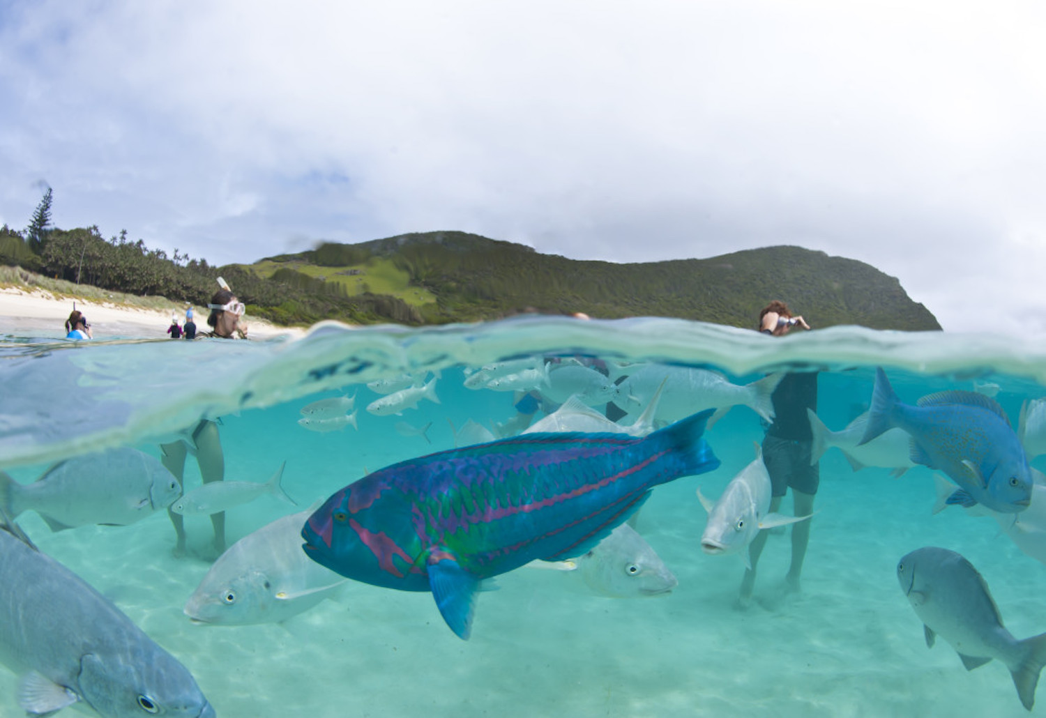 Capella Lodge at Lord Howe Island has fabulous marine life