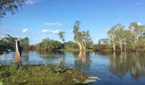 Yellow water in Kakadu