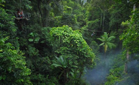 Jungle surfing – Zipline Australia style in the Daintree Rainforest