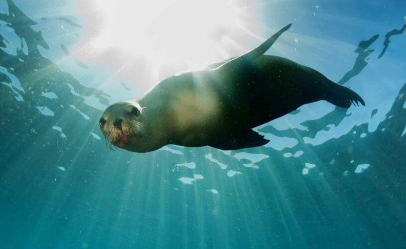 Itinerary – Close Up Ocean Encounters