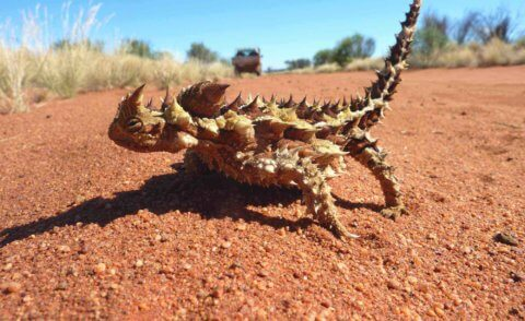 Itinerary: Wildlife in Legendary Landscapes of Australia