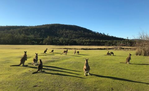 Pepperbush Adventures in Tasmania
