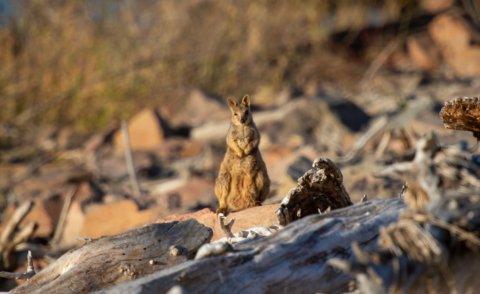 Wildlife Conservation Sanctuary Heli Swag Adventure