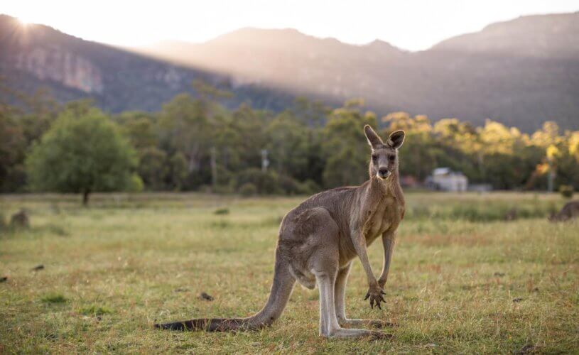 Kangaroos & Koalas by Private Jet